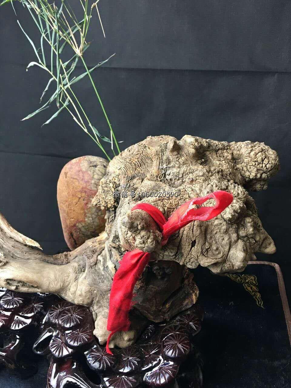 【11.26精品推荐】太行樱子瘤造型摆件《狮王》