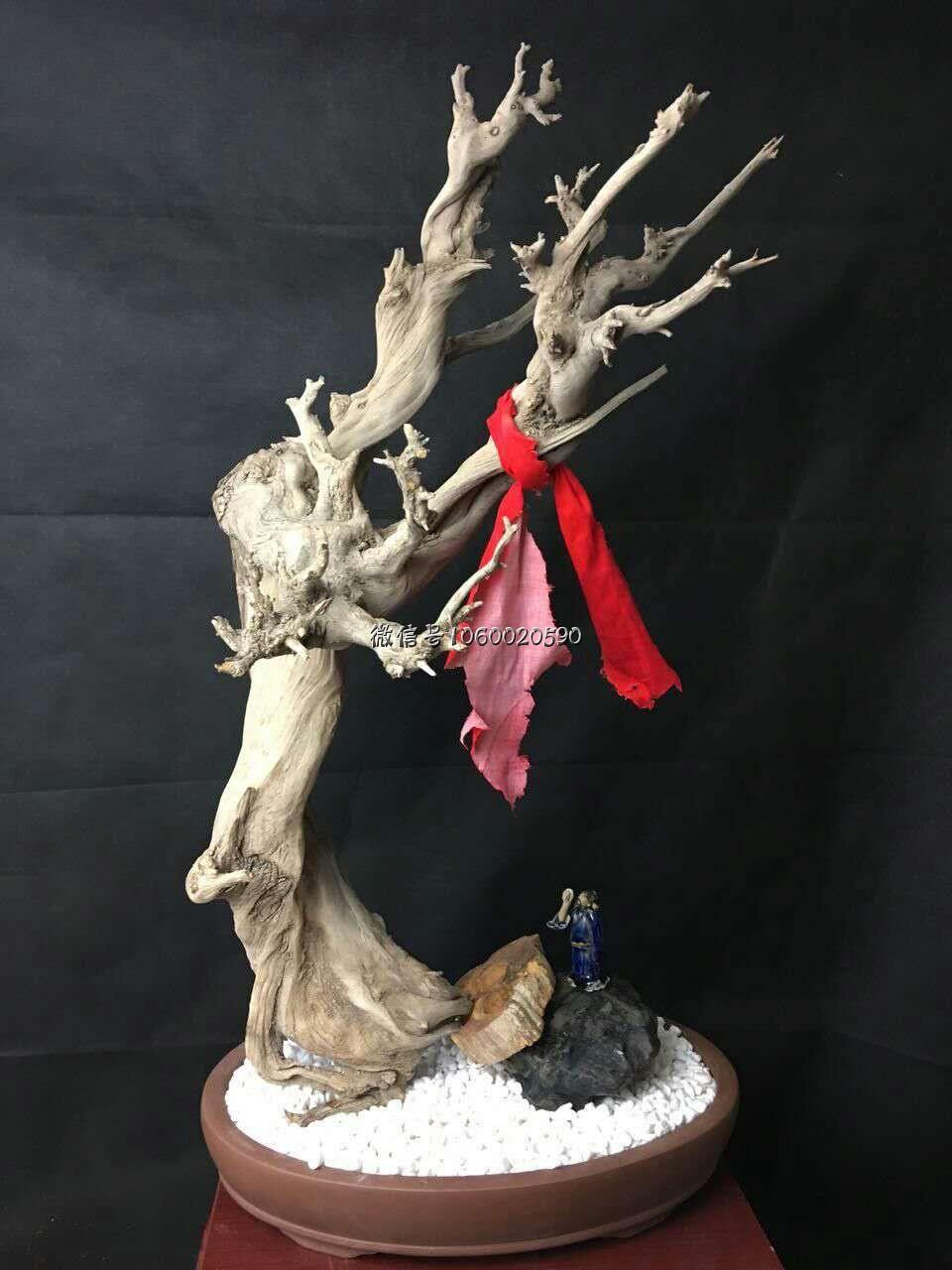 太行骨料梅花枝,完整一棵崖柏小树,收藏级