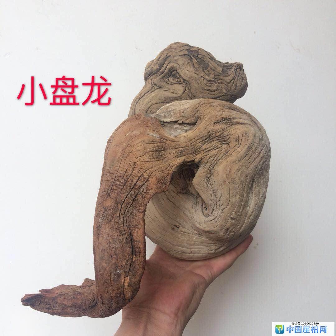 """太行崖柏满纹理象形料""""小盘龙"""""""
