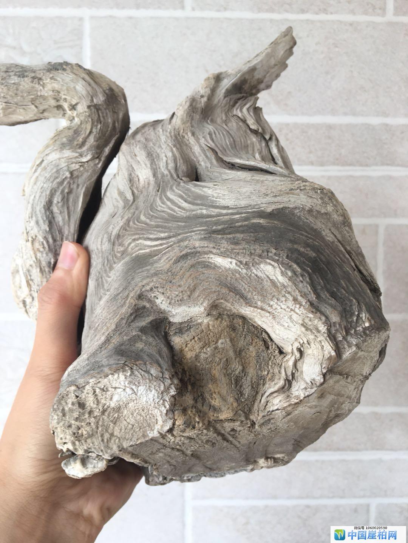 太行崖柏白粉石化骨料坨坨料