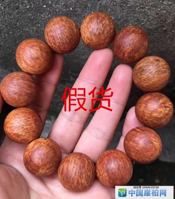 坡柏瘤(假货)