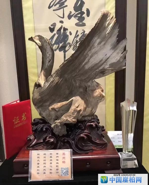 象形料《黑天鹅》