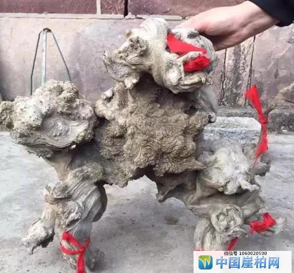 象形料《神龟》
