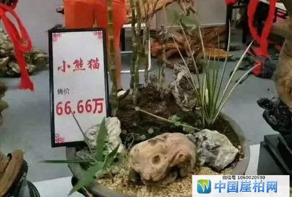 象形料《小熊猫》