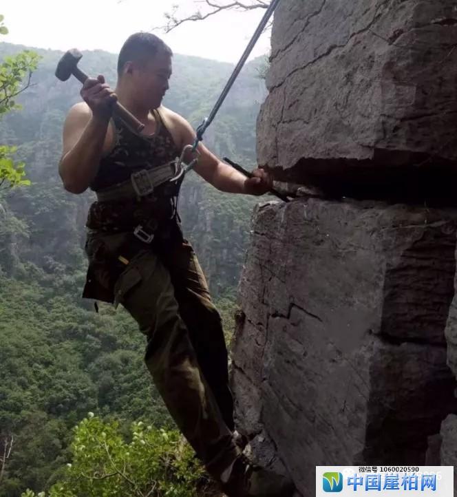 悬崖石缝中的精灵:崖柏扁根料