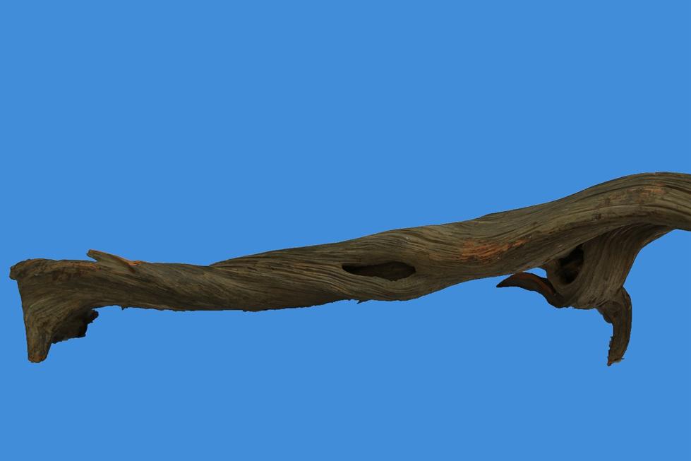 崖柏造型料:苍龙遨天