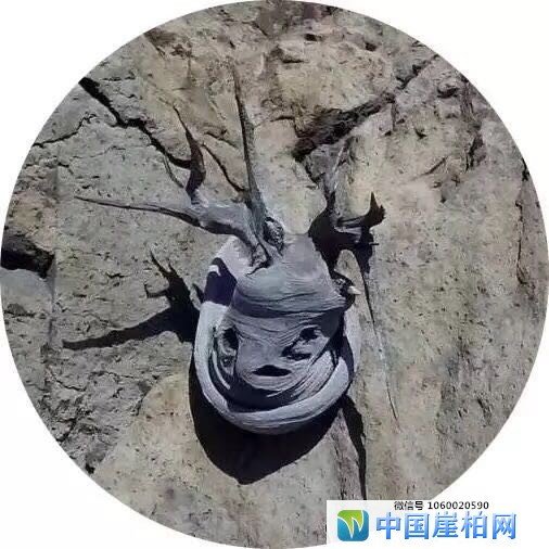 中国崖柏收藏鉴赏 《赛宝会》的评判标准