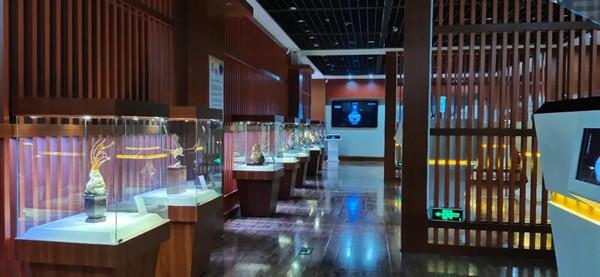 石家庄市博物馆展厅崖柏作品展示
