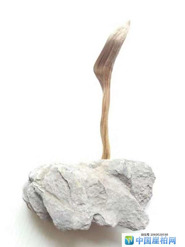 《崖壁精灵》 崖柏作品 高7厘米、重0.01斤