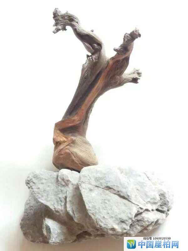 《崖壁精灵》 崖柏作品 高18厘米、重0.25斤