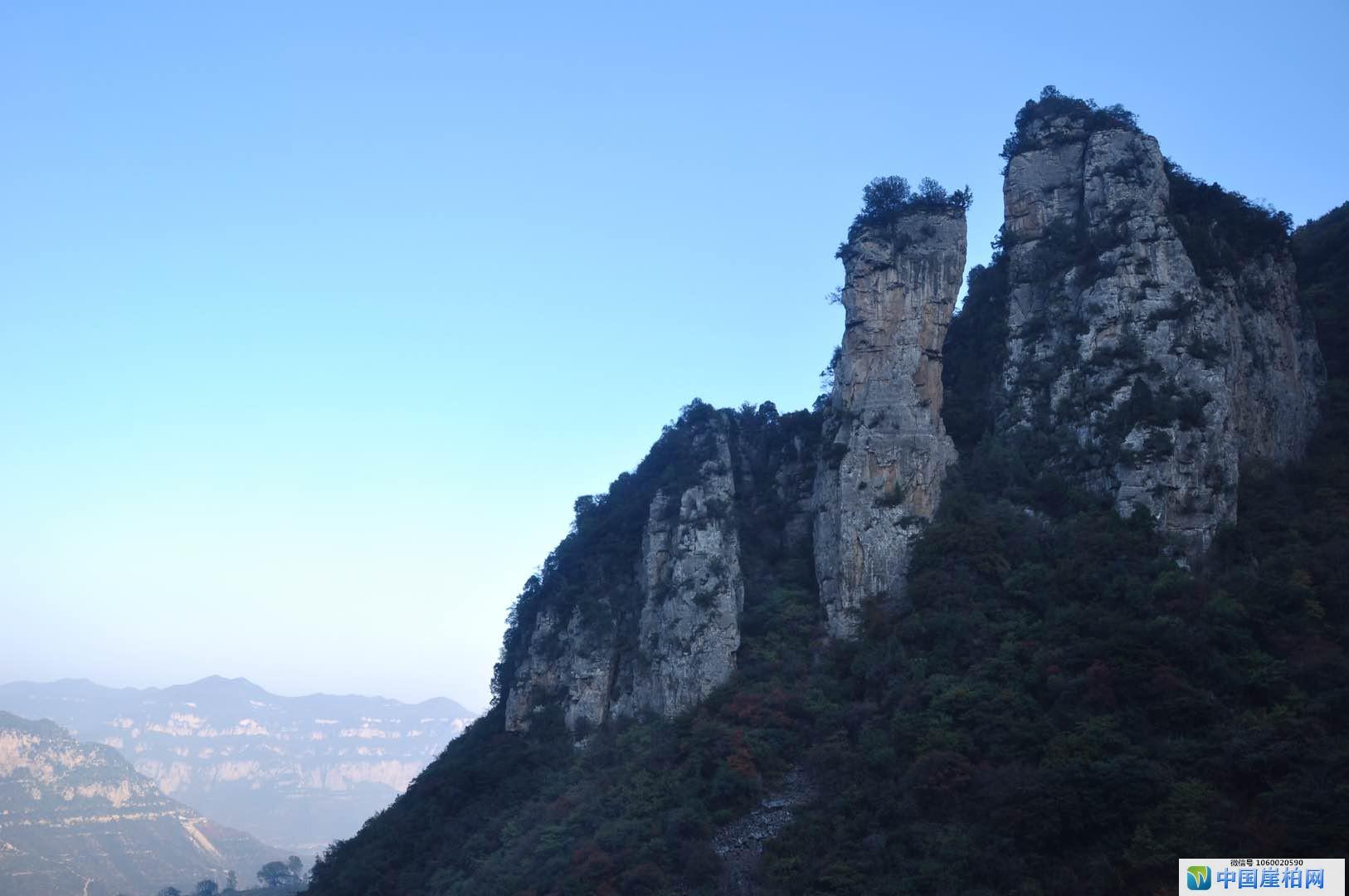 中国崖柏收藏鉴赏