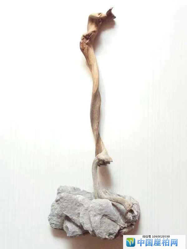 《崖壁精灵》 崖柏作品 高35厘米、重0.1斤
