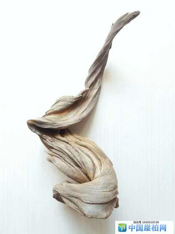 《卯免》    崖柏作品 高30厘米、重o.5斤