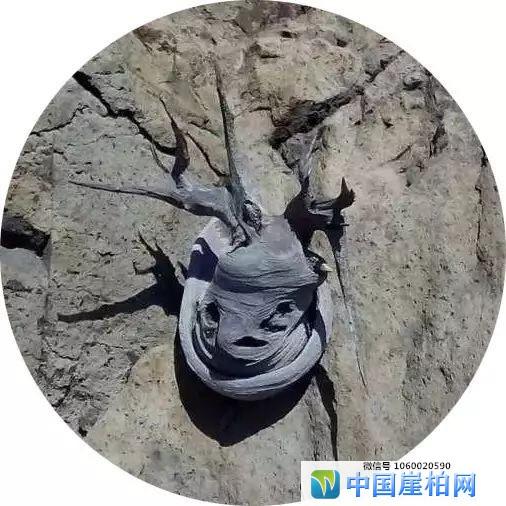 崖柏狂人:我与赵忠祥老师