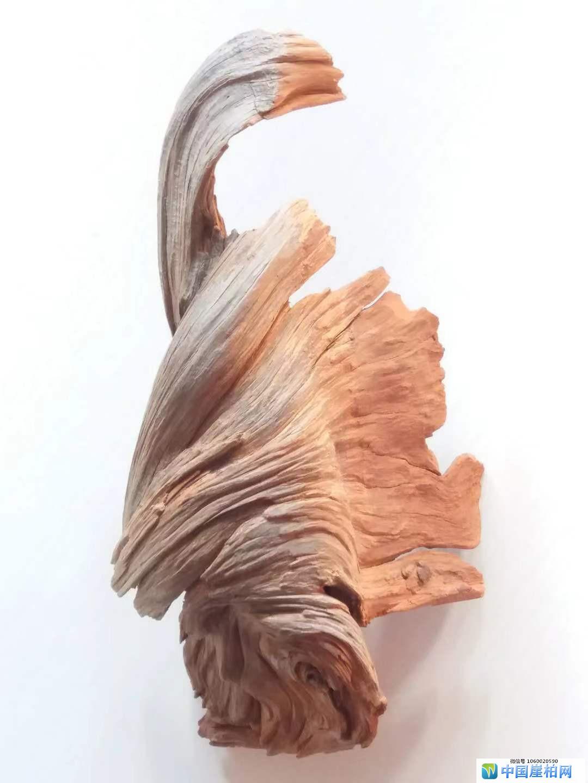 《仁者寿》   崖柏作品 高32厘米、重l.5斤