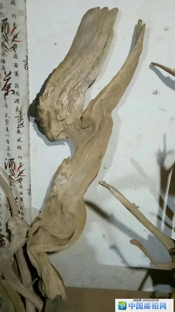 """膜拜""""柏中菩萨"""",崖柏香料/香气之""""三性"""""""