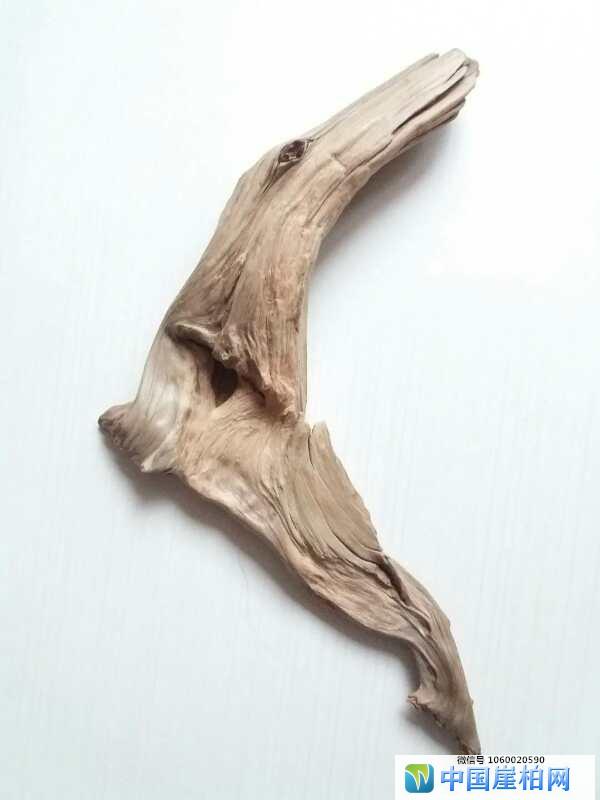 《心驰神往》    崖柏作品 高46厘米、重 1斤