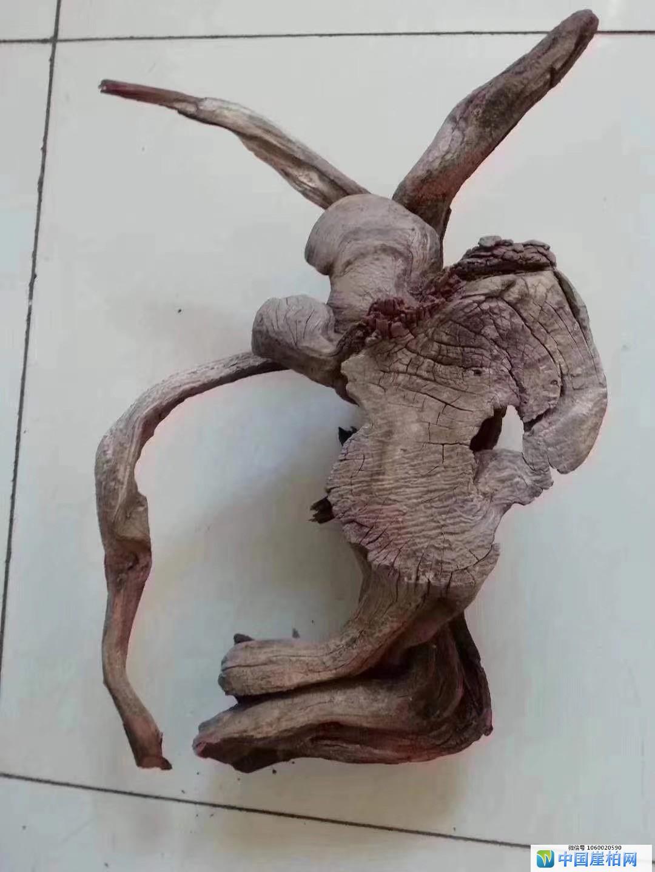 自然天成的象形崖柏是特殊的艺术品