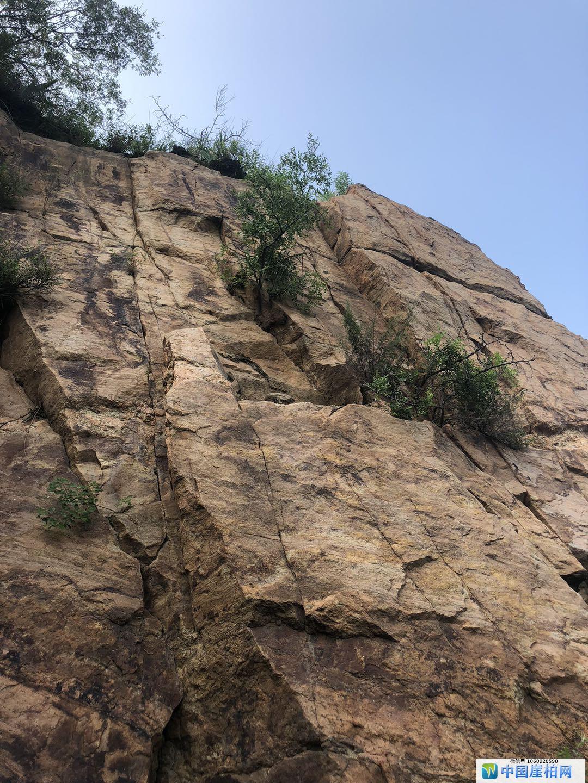 悬崖峭壁上隐约有崖柏的影子
