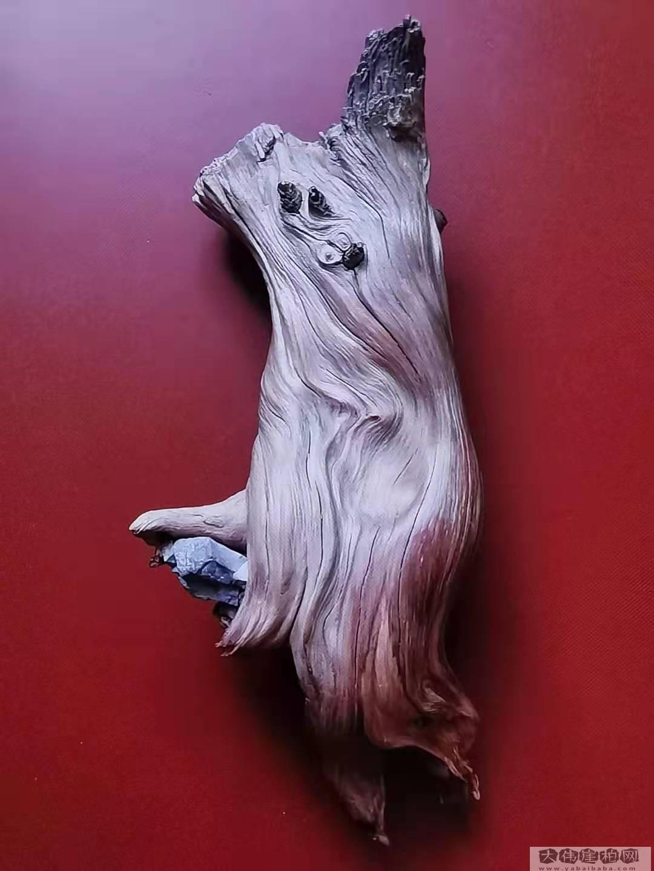 《礼尚往来》崖柏作品  高21厘米  重450克