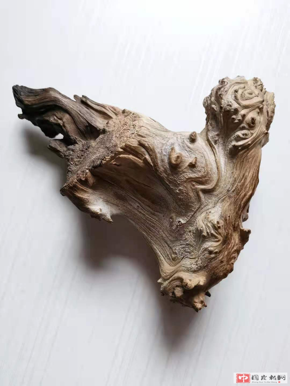 《狮》  崖柏作品 高11厘米   重260克